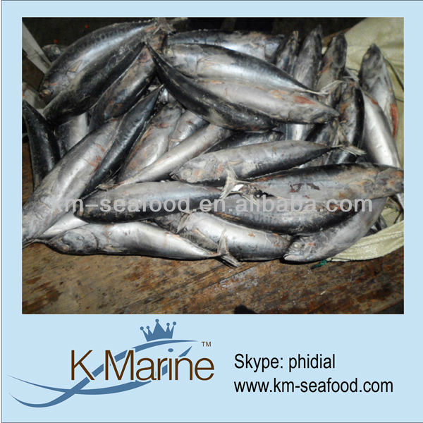 Sea pack frozen food fish