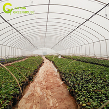 The Cheapest Agricultural Film Covering Single- Span Greenhouse