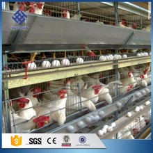 30 Years' factory supply 3 tier 120 capacity chicken layer cage