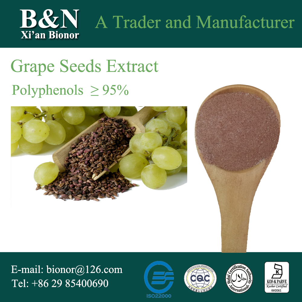 High Quality Proanthocyanidins Extract from 100% pure Grape Seed Grape leaf extract
