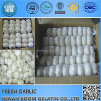 Chinese Fresh Garlic in Hot Sale