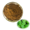 Best Quality Hot Sale Lemon Balm Extract With Free Sample
