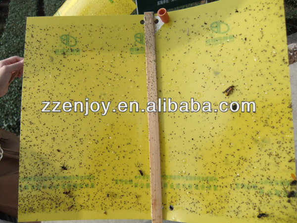 flying insect glue trap for agriculture pest control