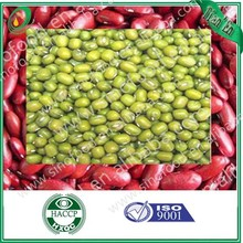 Green mung bean 2013 new crop
