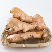 High Quality Top Fresh Ginger Price In China