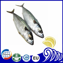 2016 best quality canned fish mackerel