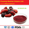 Sang shen Factory Supply High Quality Mulberry Fruit Extract