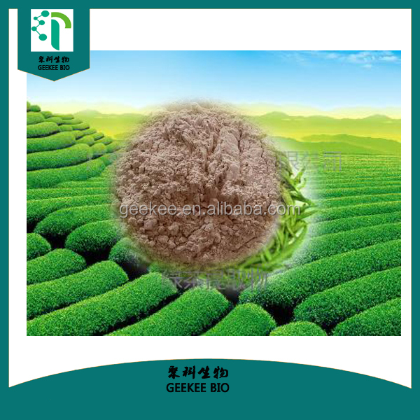 Manufactory provide Natural green tea leaf extract at competitive price