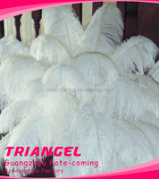 Top Quality Gorgeous Ostrich Feather For Wedding Centerpiece
