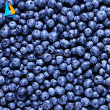 IQF Frozen Blueberry Export Price