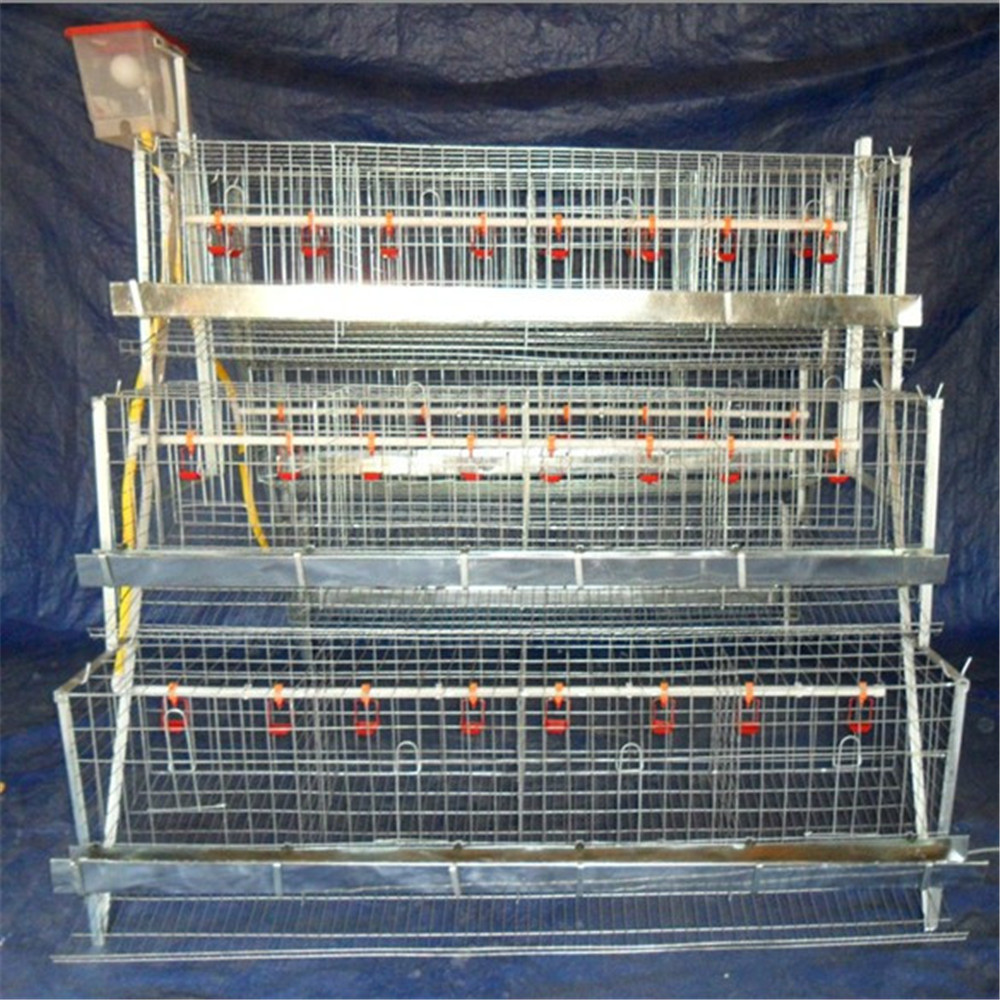 Poultry automatic breeding system chicken grower cages