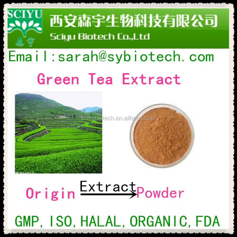 Green tea leaf extract / Camellia sinensis / polyphenols 90% / EGCG40%