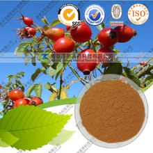 11 Year Factory Supply Dried Rosehip Powder