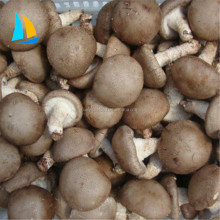 New Crop IQF Frozen Shiitake Mushroom For Sale