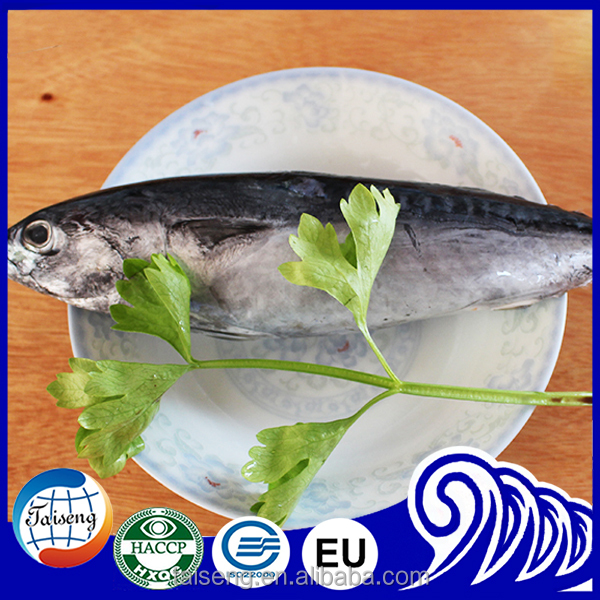 Whole round Bonito tuna For Frozen Seafood importer