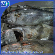 Frozen yellowfin tuna Whole Round