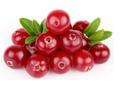 GMP Cranberry Extract in Fruit Extract