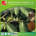 Eucommia leaf extract supplier