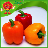color peppers market price sweet round pepper fresh cherry peppers