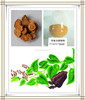 polygonum multiflorum thunb extract powder,ho shou wu extract powder