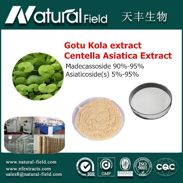 Standard production with Normative SOP Water Soluble Total Triterpenes 70% Gotu Kola Powder