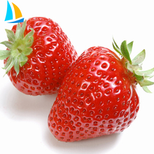 Hot sale fresh frozen IQF strawberry