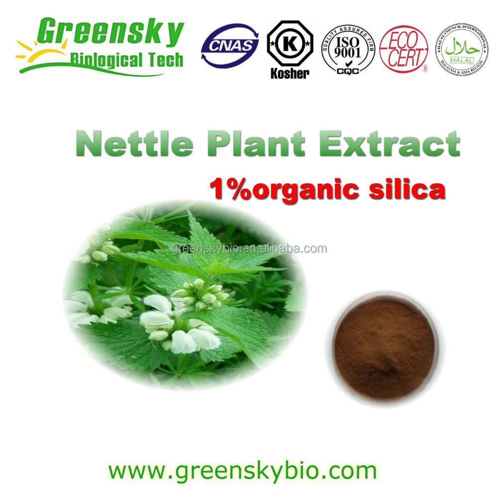 2015 New Arrival Natural Stinging Nettle Extract / Urtica Cannabinaa L.