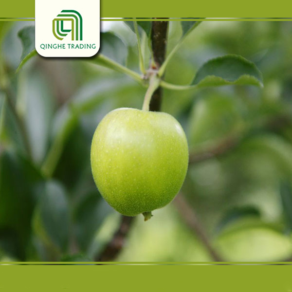 wholesale fresh fruits apples granny smith fresh green apples with low price