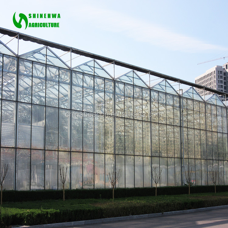 Multi Span Agricultural Vegetable Greenhouse Products