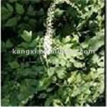 hot sale Black Cohosh Extract 1.5% Triterpene Glycosides (HPLC)