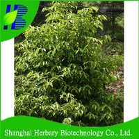 2016 Fresh agarwood tree seeds with high germination rate