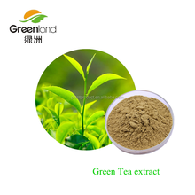 Green Tea Extract Or Camellia Sinensis Extract