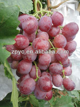 Fresh seeded grapes