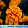 naturally marigold flowers extract lutein/ top quality marigold extract/ pot marigold extract powder