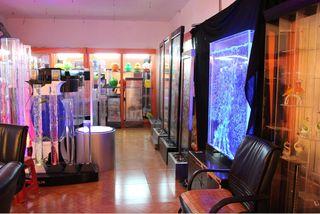 Int Rieur Aquarium D Coration Fabricant Fournisseur Maison