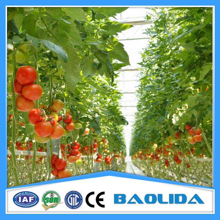 Agricultural Hydroponic Tomato Greenhouse For Sale