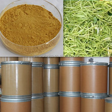 100% Natural Herb Extract Wild Honeysuckle Flower Extract Powder Pure Chlorogenic Acid