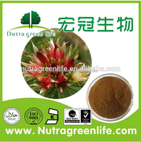 Professional supplier rhodiola rosea extract Salidroside