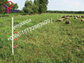 professional electric fence for cattle