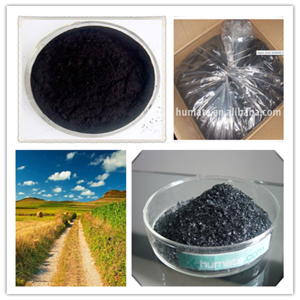 Ascophyllum Nodosum Seaweed Extract for plant growth