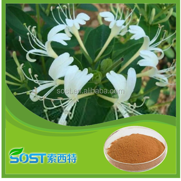 factory supply pure natural HoneySuchle Flowers Extract