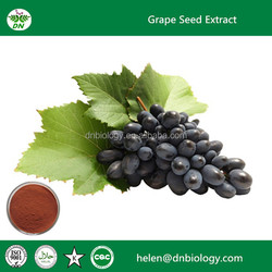 Professional manufacturer grape seed extract PAC 98% plant extract