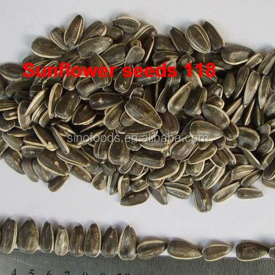dried sunflower seeds bio sunflower seed