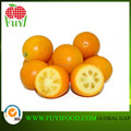 FRESH YELLOW KUMQUAT FRUIT FROM CHINA