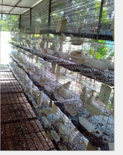 24 pigeons breeding cage with feeding accessories for sale HJ-PC24