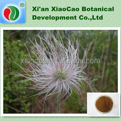 High Quality Anemone Root Extract 10:1