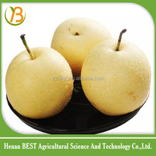 iqf frozen diced snow pear price/gala pear organic fruit/korean pear