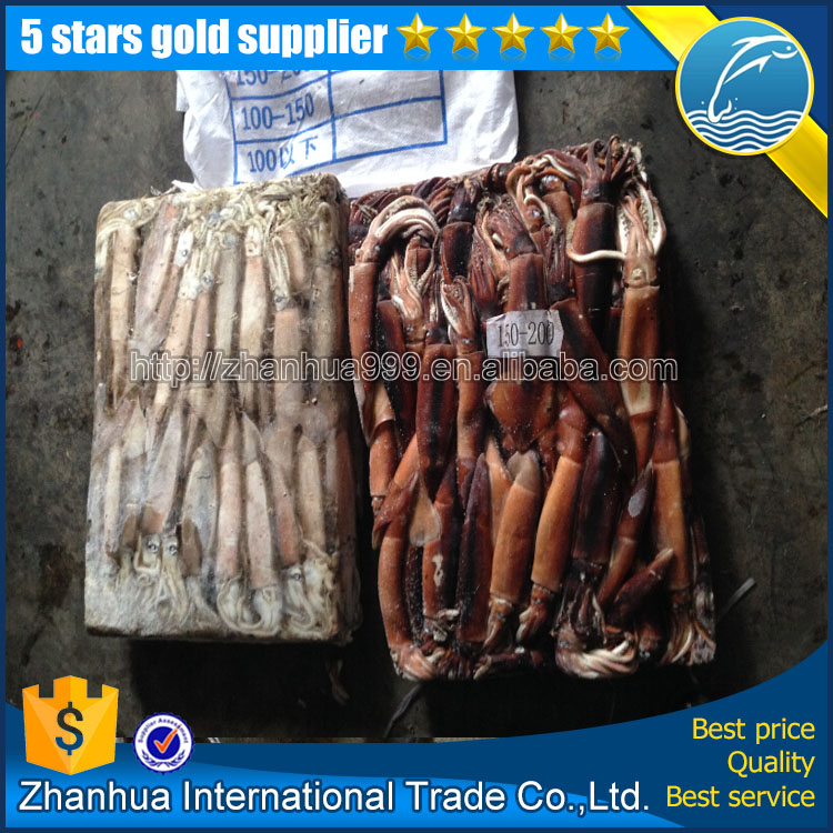 New arrival frozen squid bait 200-300g chocolate illex argentina squid