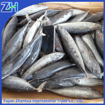 frozen bonito fish for sale New stock 2015