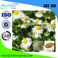 factory supply 100% pure and natural chamomile extract